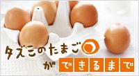 タズミの卵ができまで